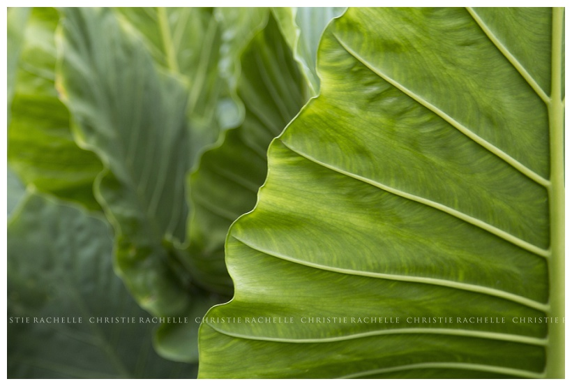 arneson-acres-palm-leaf.jpg