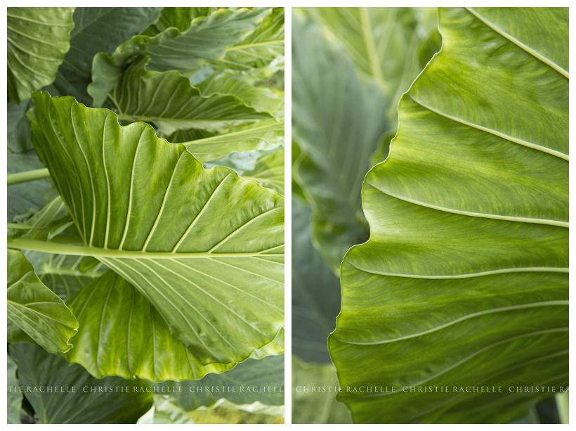 arneson-acres-palm-leaf