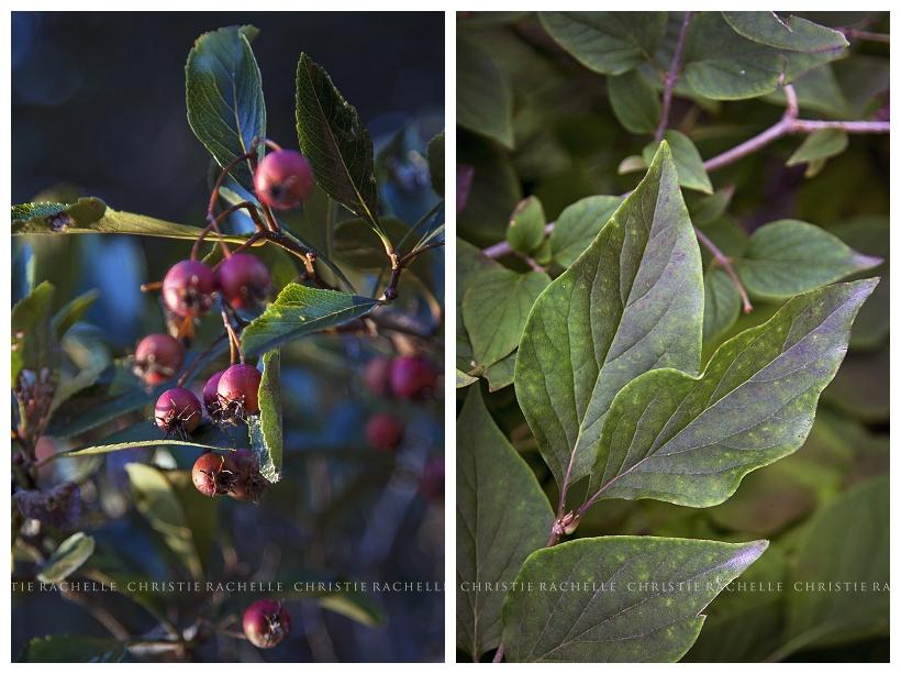 arneson-acres-berries-leaf