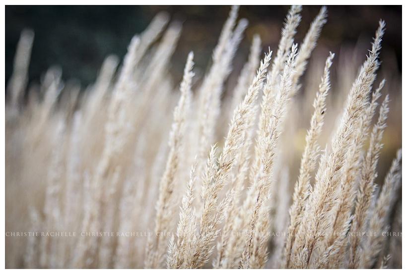 arneson-acres-wheat-park