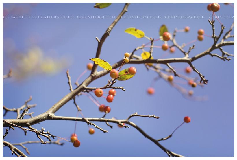 flowering-tree-berry-alimagnet-park