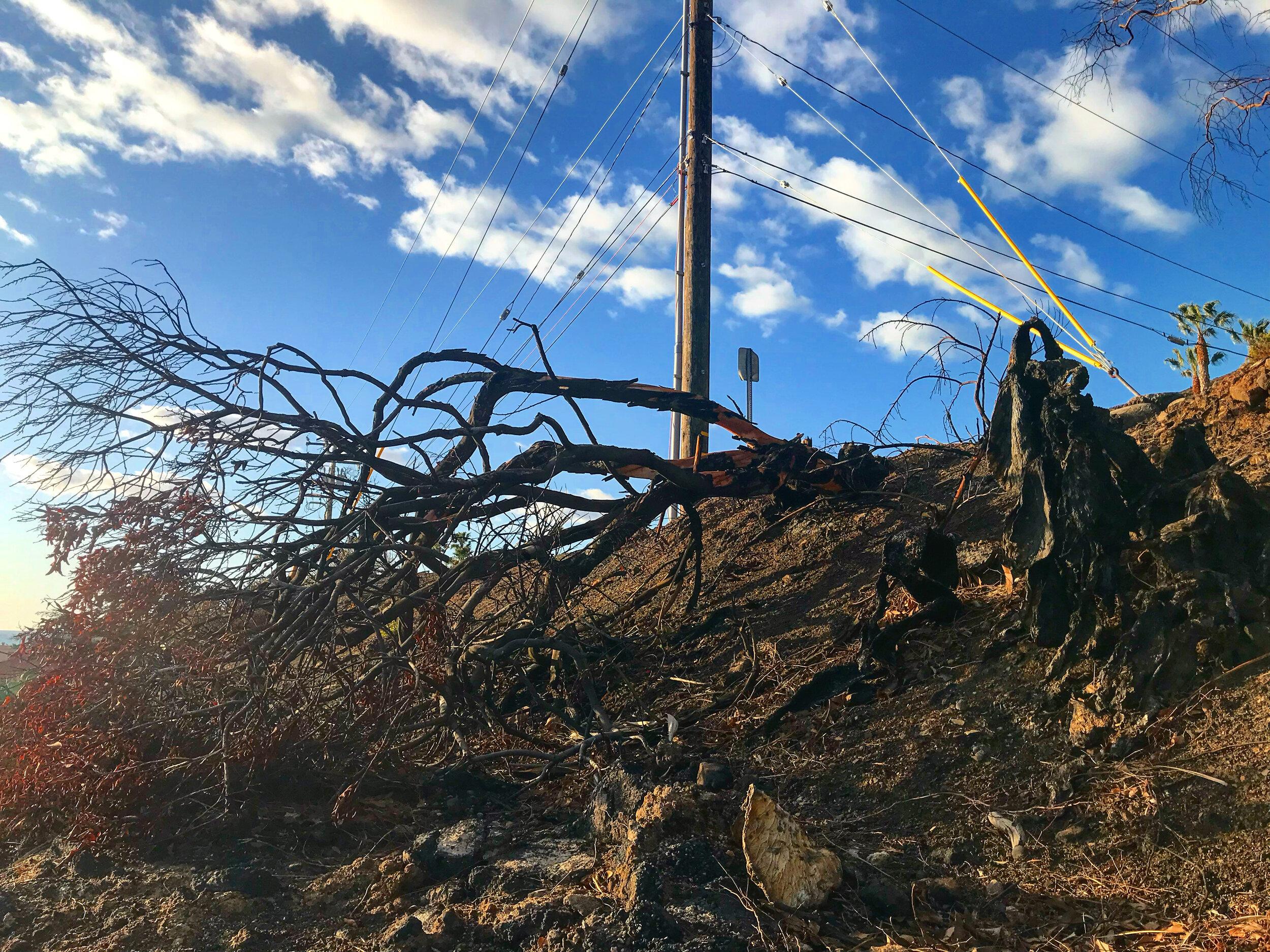 February 2019 - Black and Burned Trees on a hill in our neighborhood (📷: Lisa Butala Zabaldo)