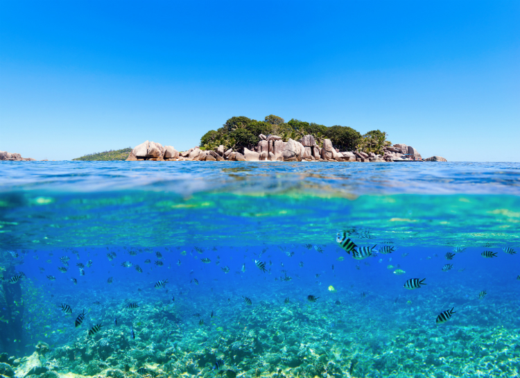 Under & above sea water in Seychelles