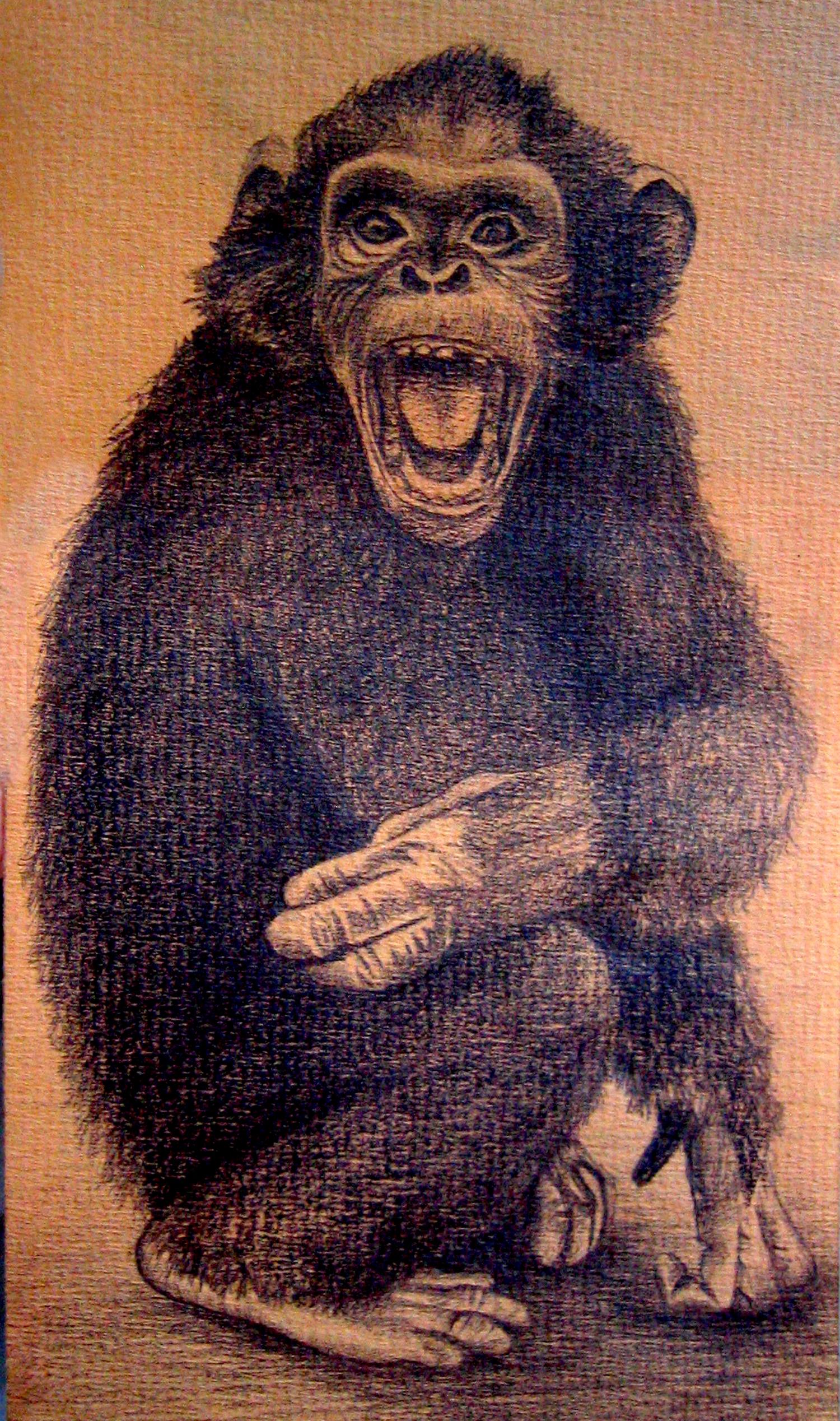 Chimp-1500.jpg