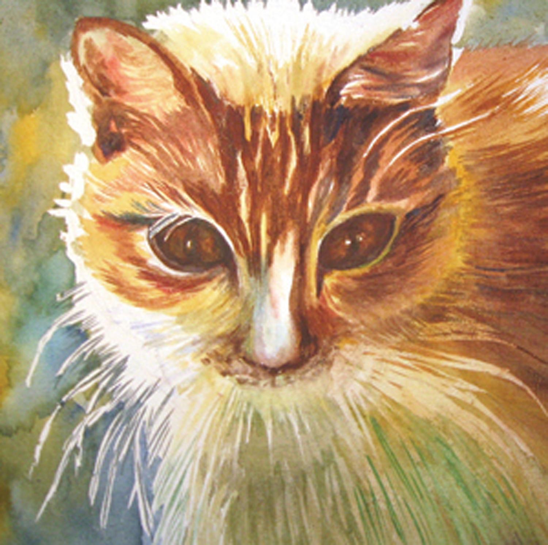 Backlit Cat.jpg