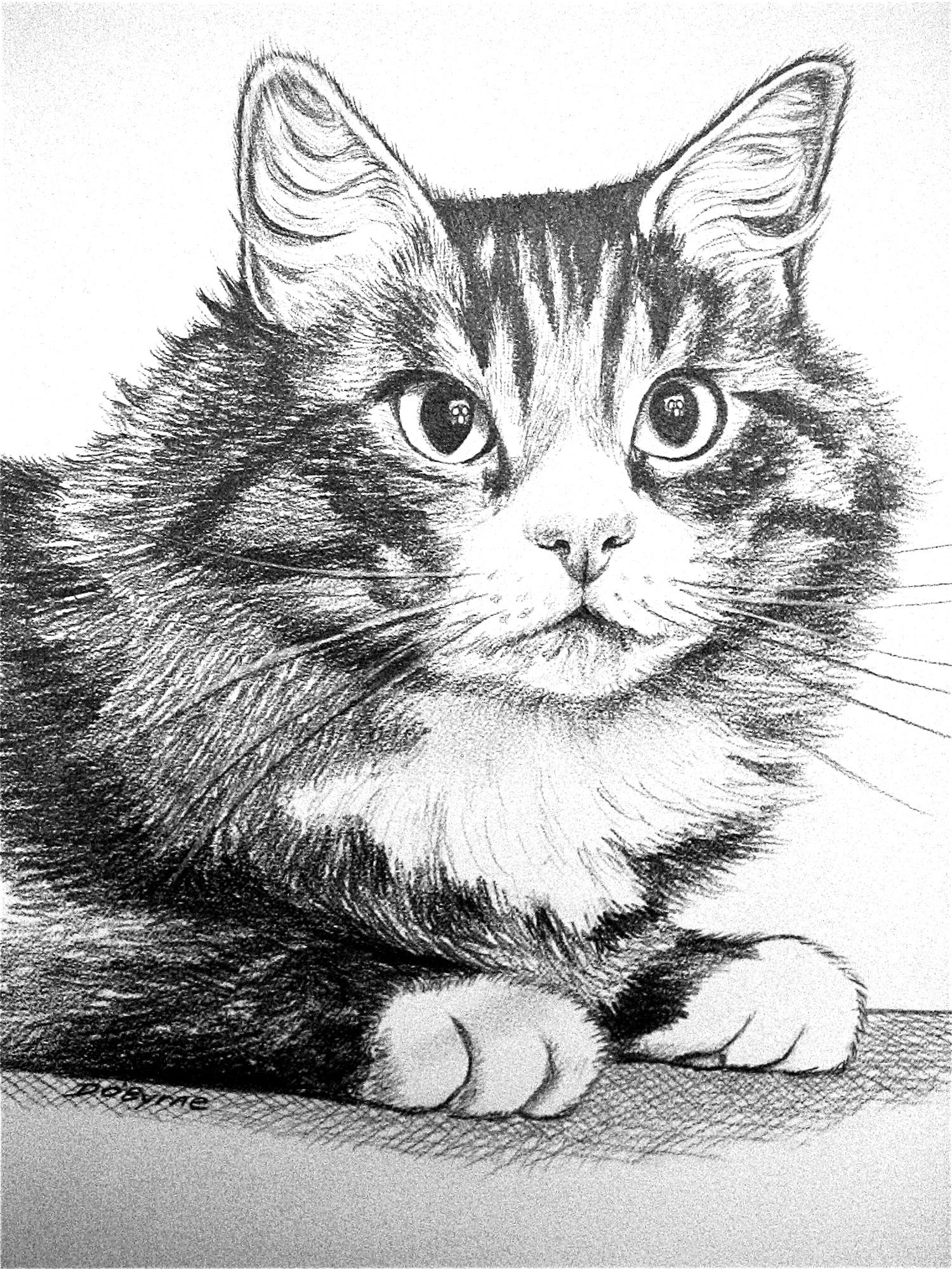 Cat Sketch 1500.jpg