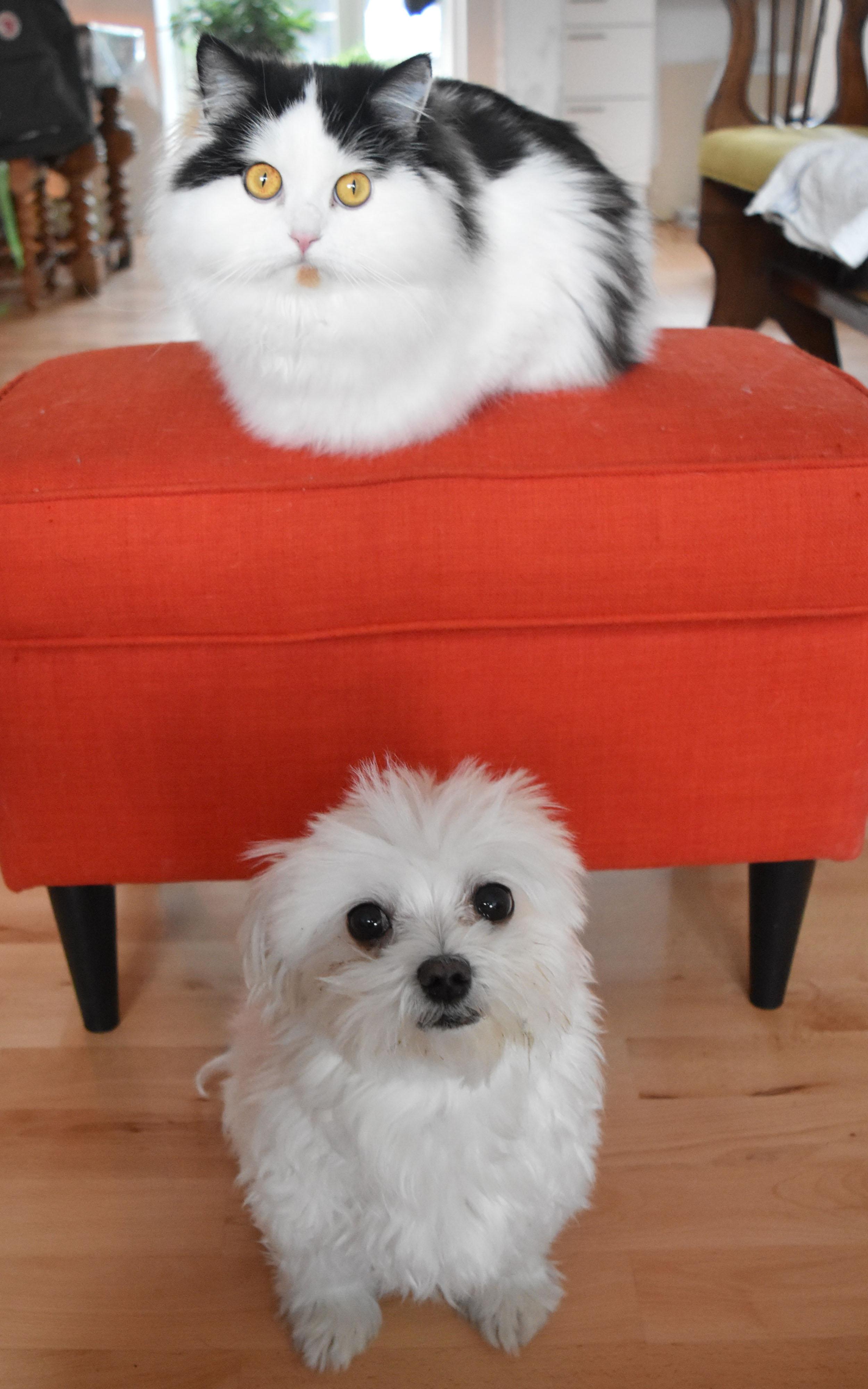 Bonus foto af Kivistik og Cleo. Kivistik vejer 4.4 kg og Cleo er lidt mindre.