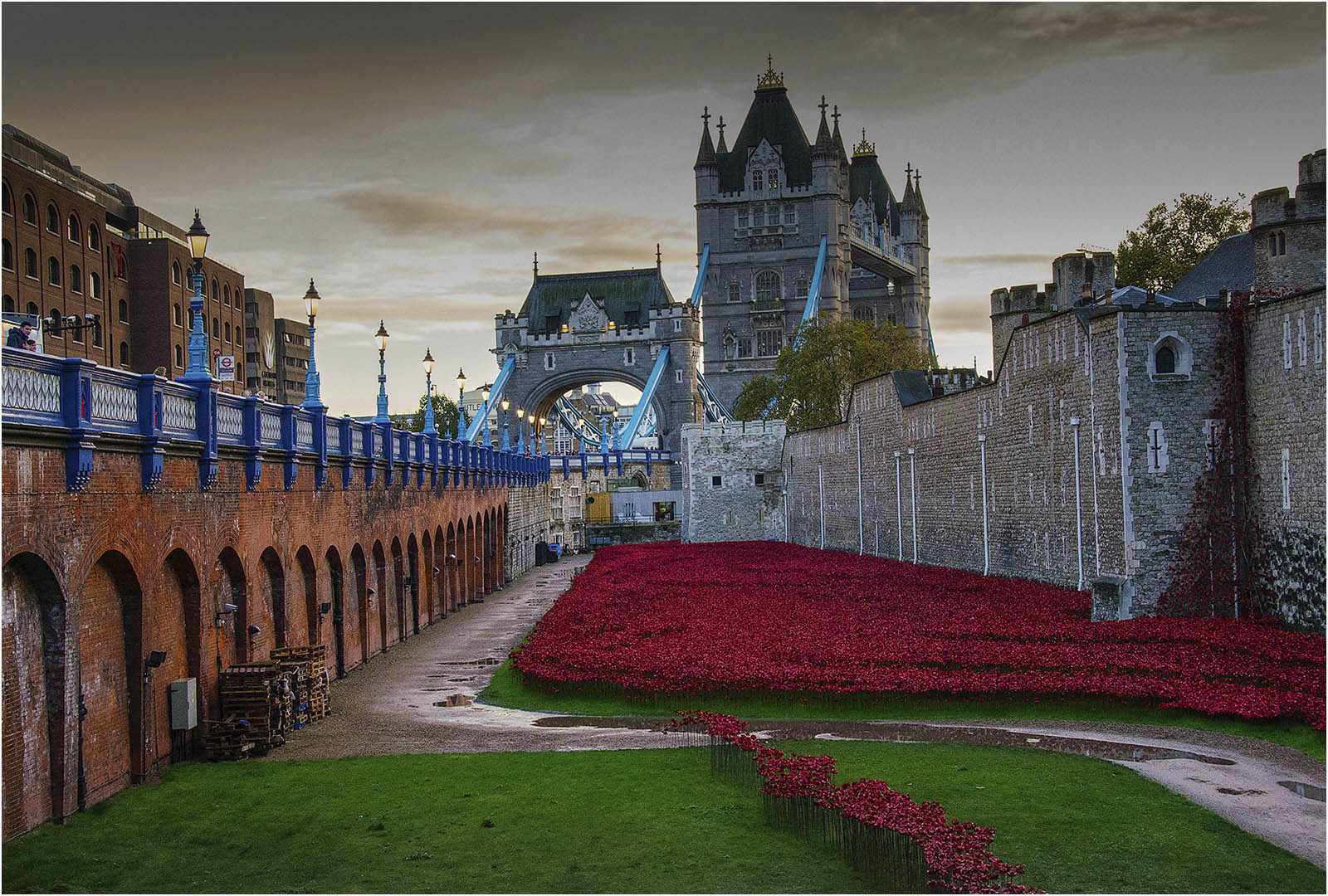 Rememberance Poppies in the Tower Moat