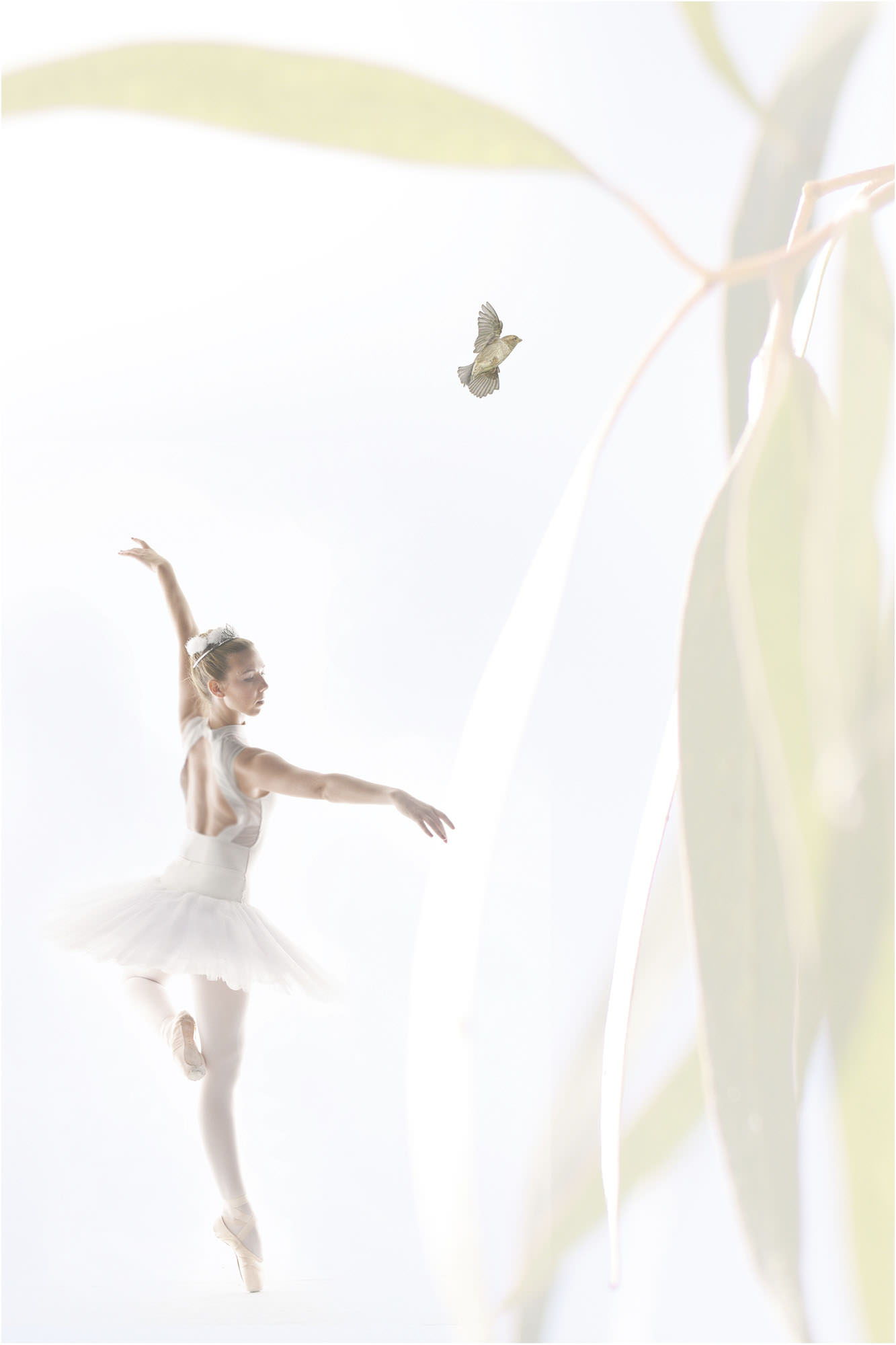 Exquisite Dancer