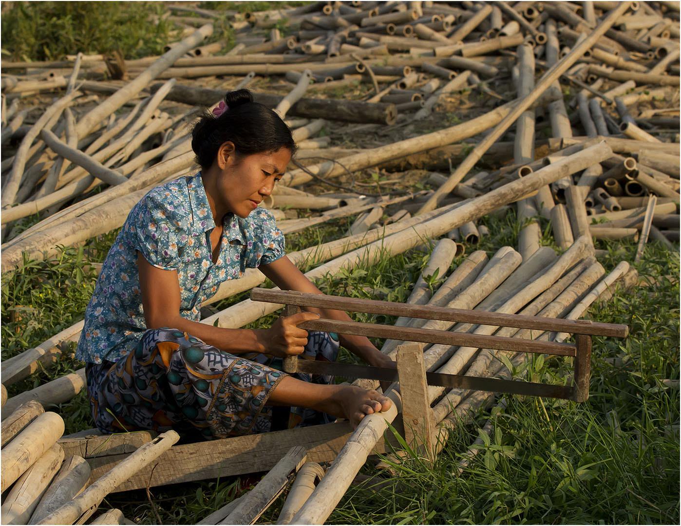The Bamboo Trade