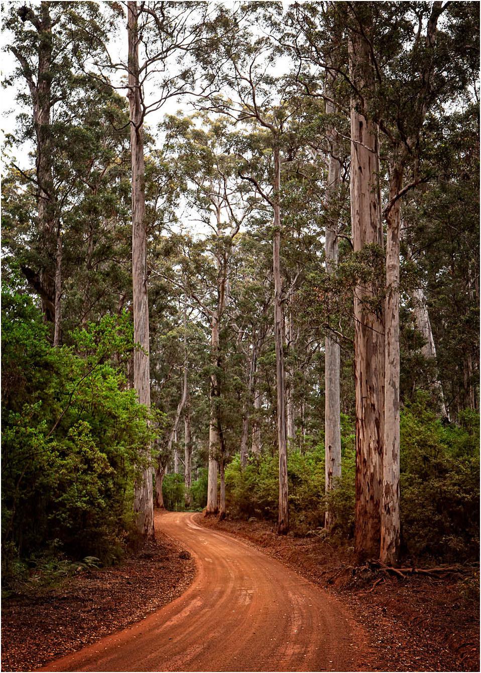 Karri Forest Drive