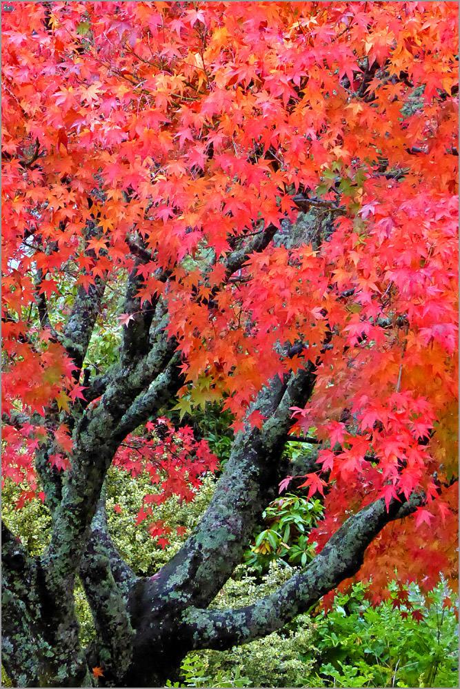 Autumn Colours NZ