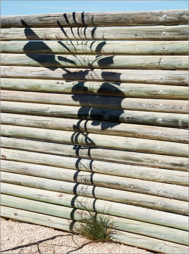 Shadow on Fence