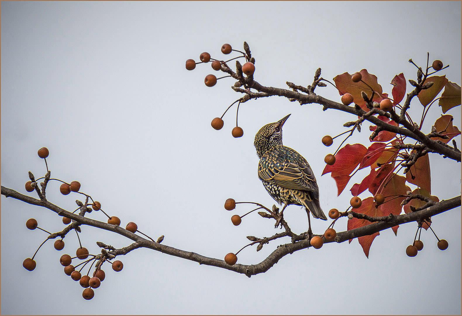 Autumn Visitor