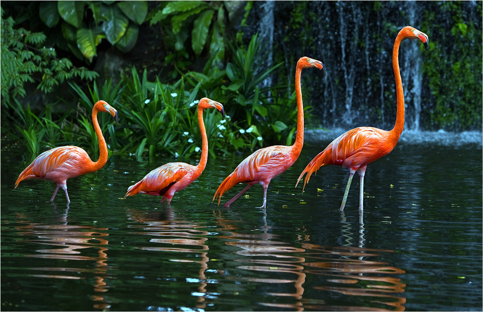 Flamingo Queue