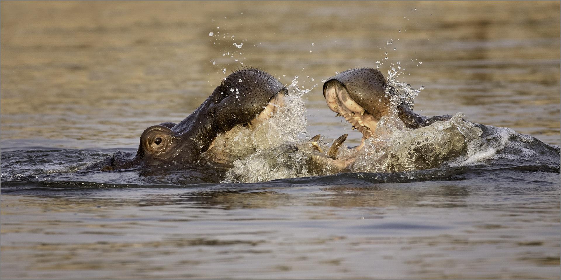 Hippos' Spa