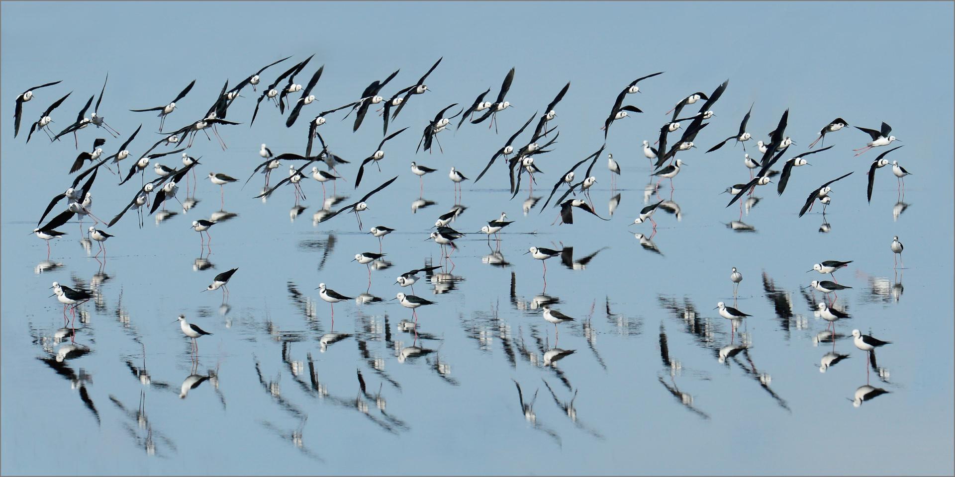 Stilts Flock