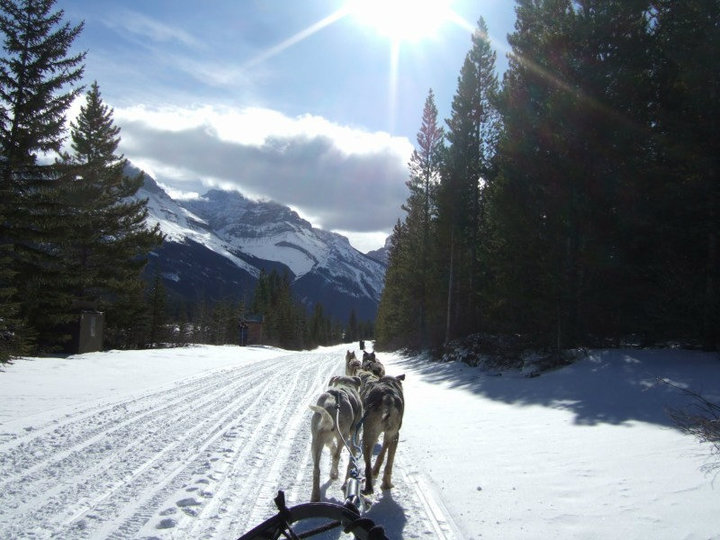 View from a dogsled.jpg