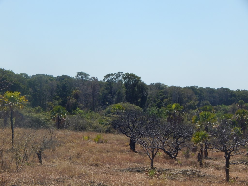 Forêt galerie Mandrava.JPG