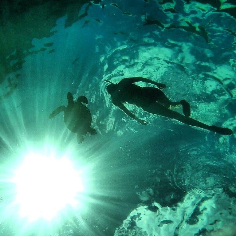 Great view looking up at the snorkeler, the turtle, and the sunburst.  Photo by John Thompson.