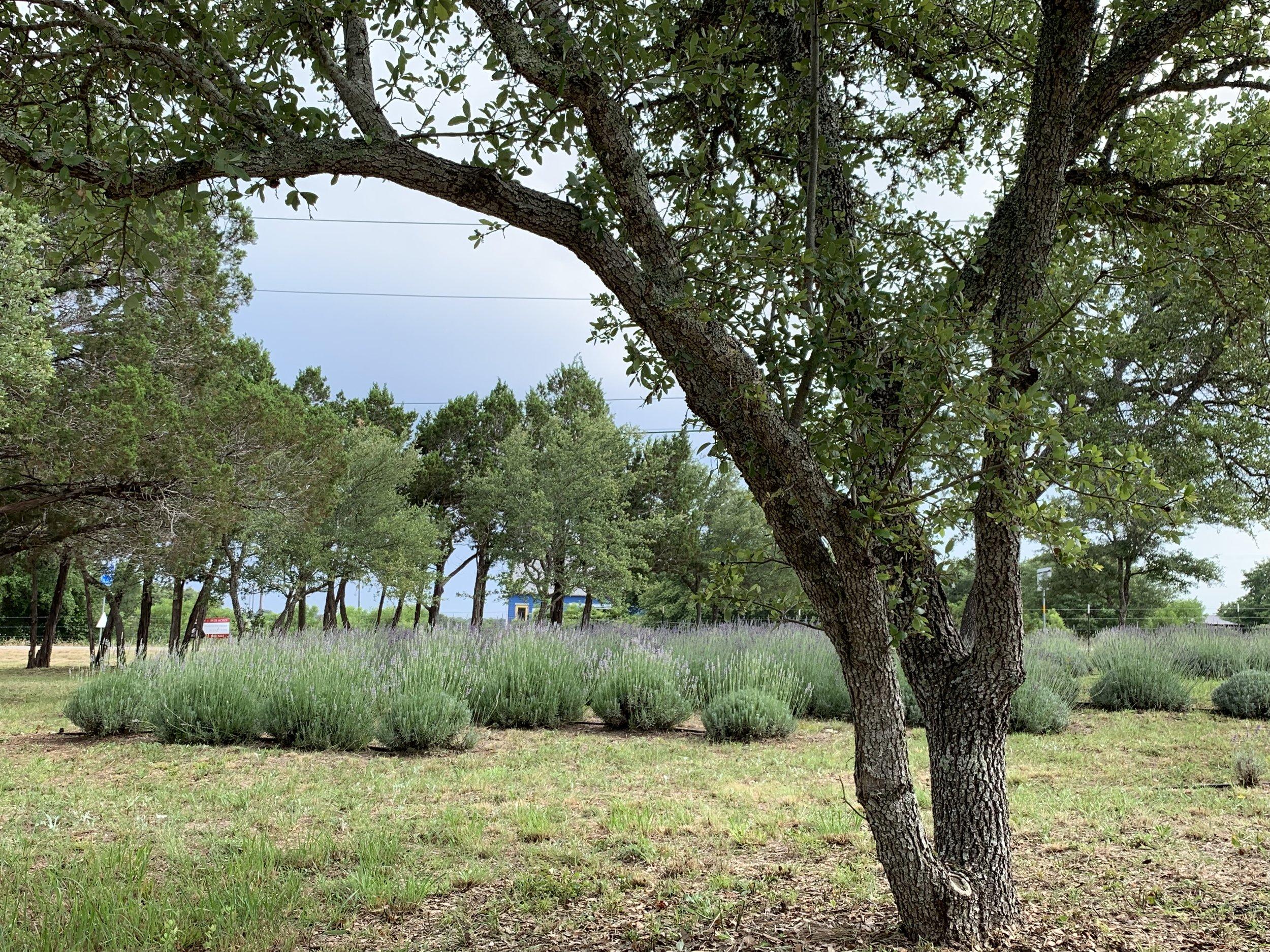field06.jpg