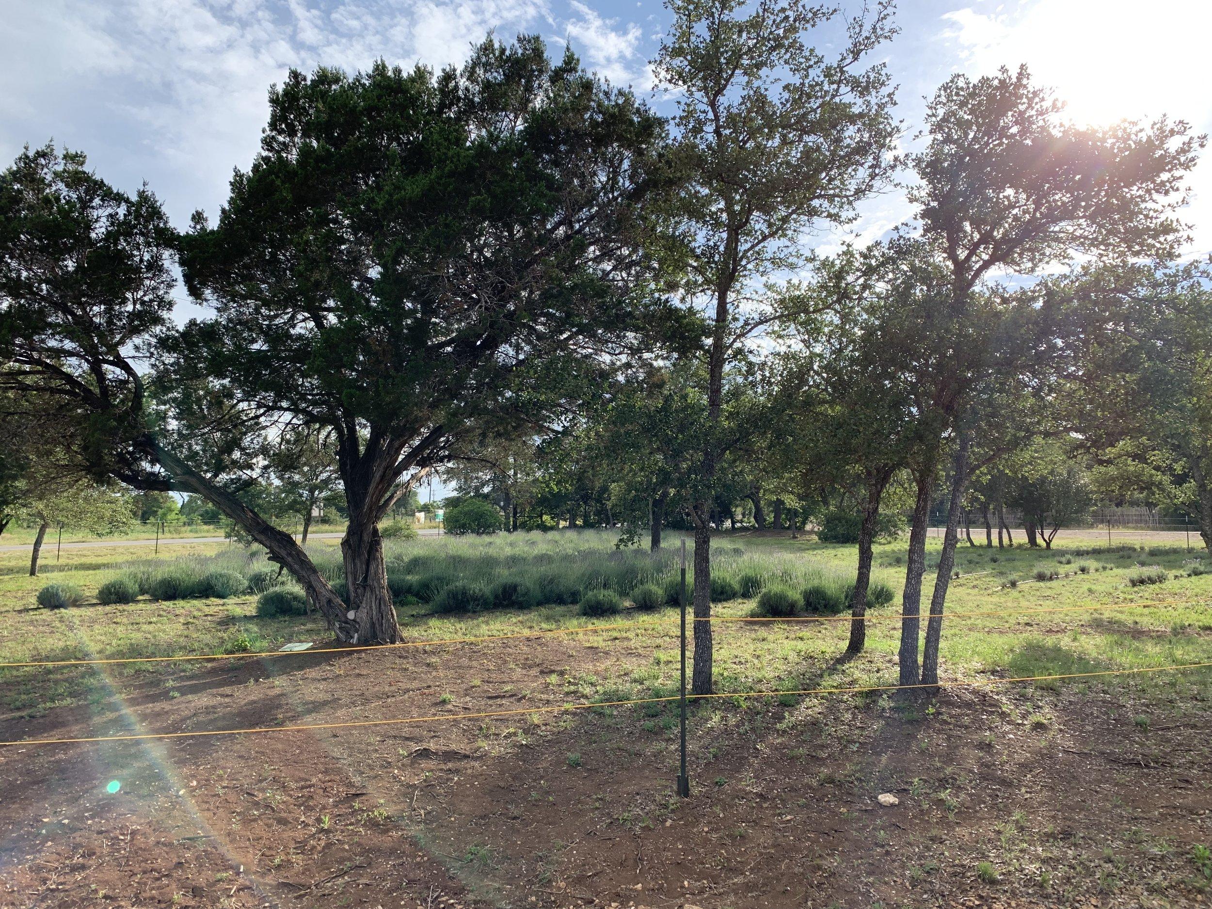 field05.jpg