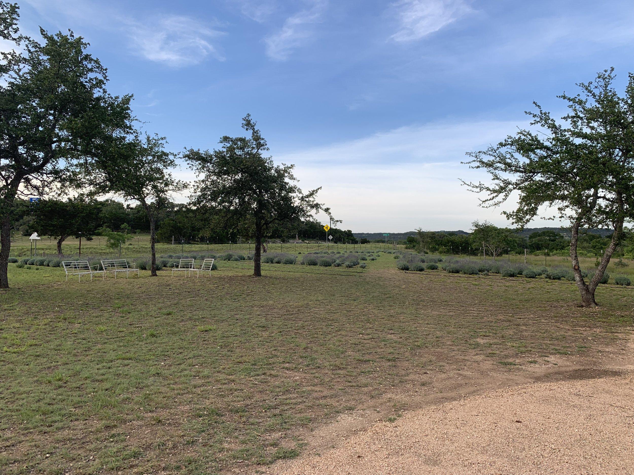 field18.jpg