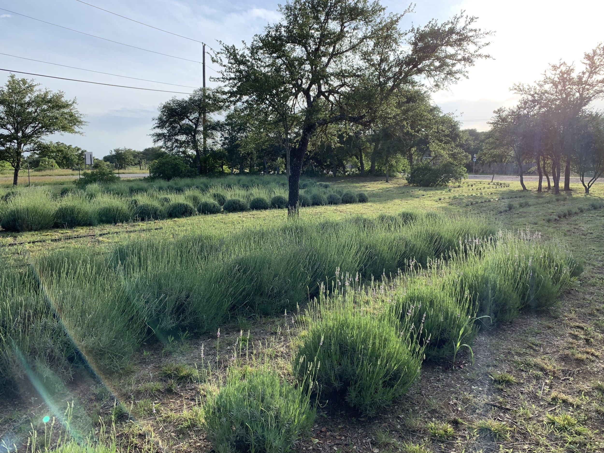 field#1-07.jpg