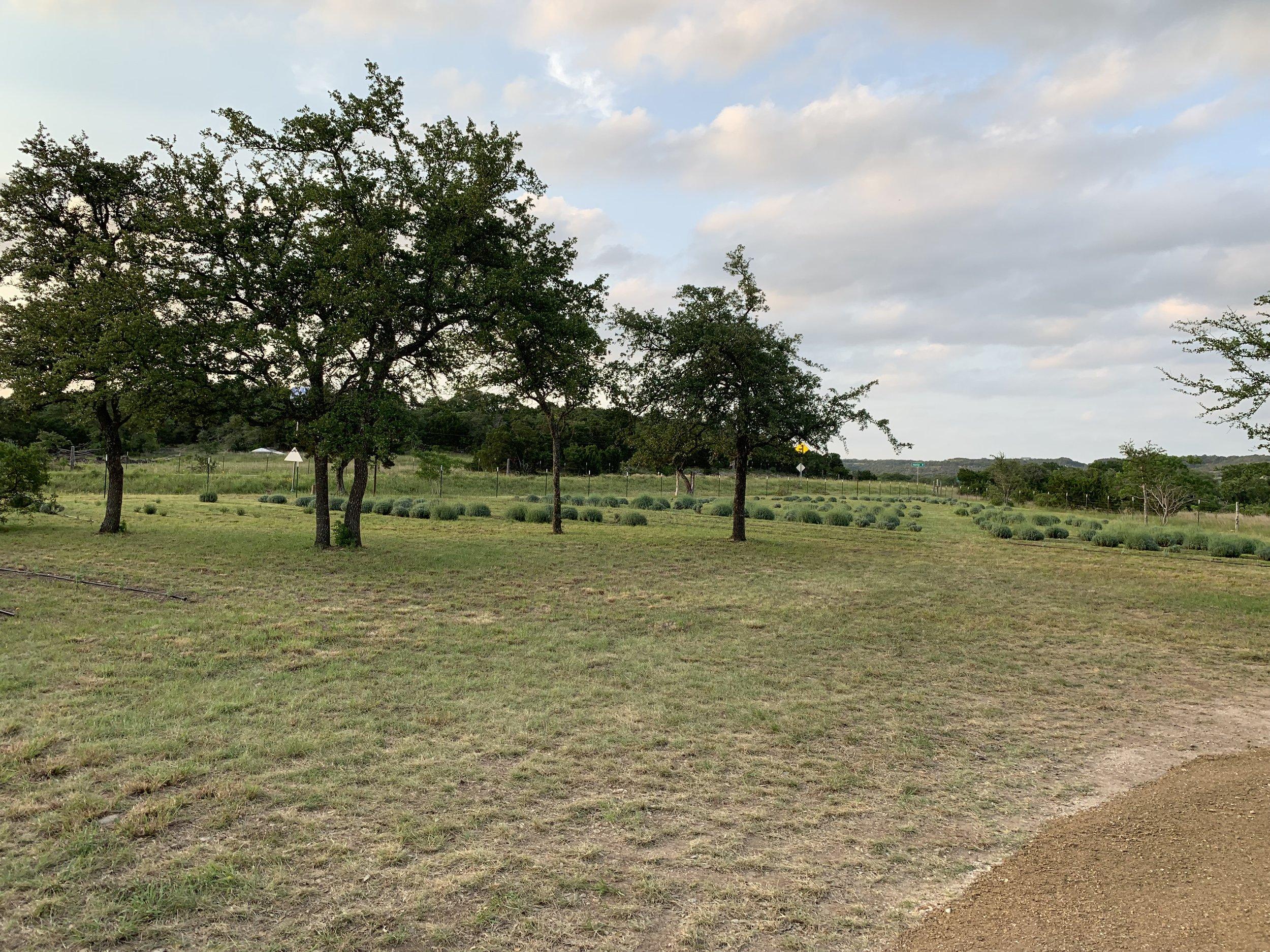 field#2-16.jpg