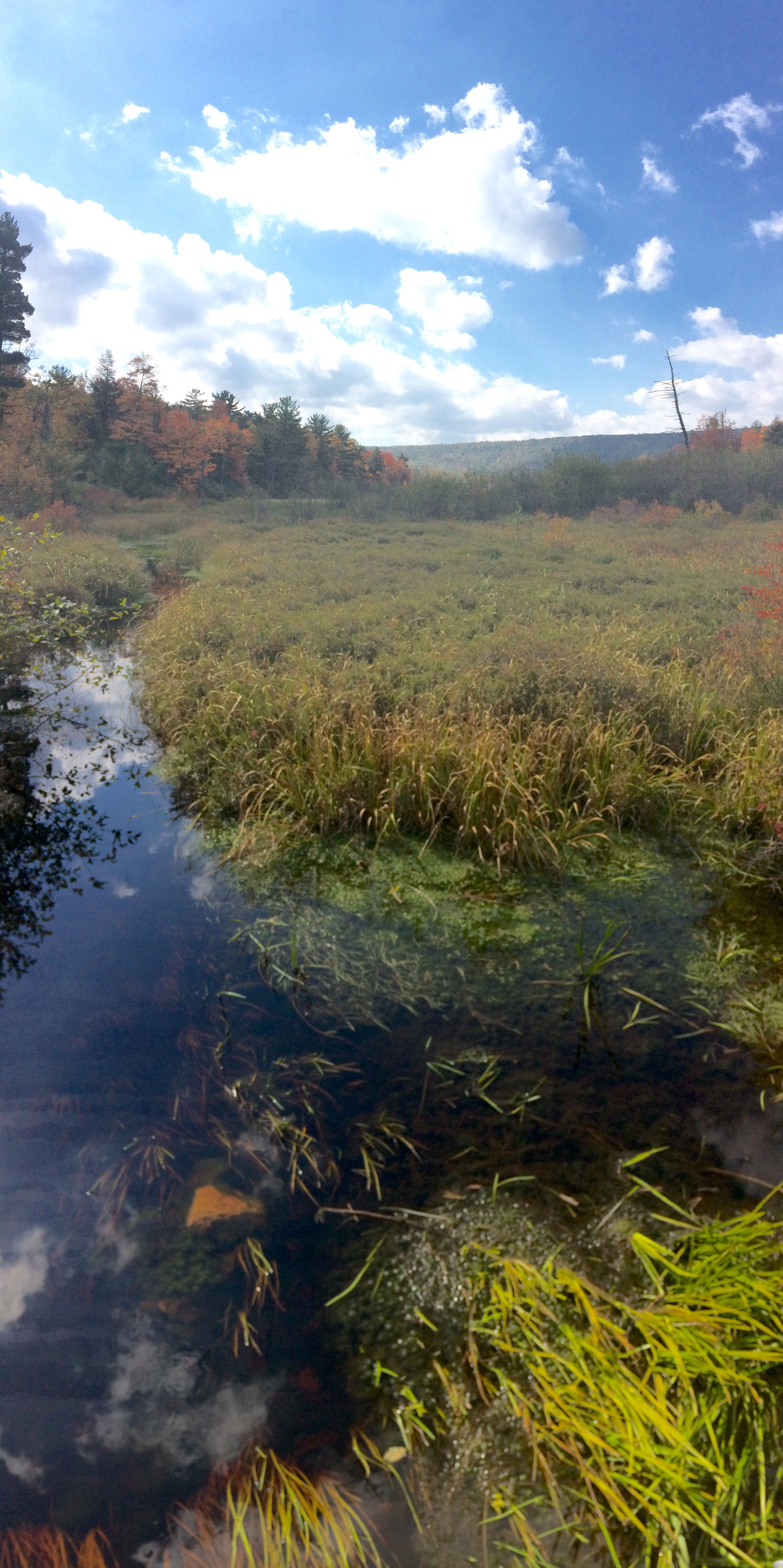 Bear Meadows Natural Area, PA