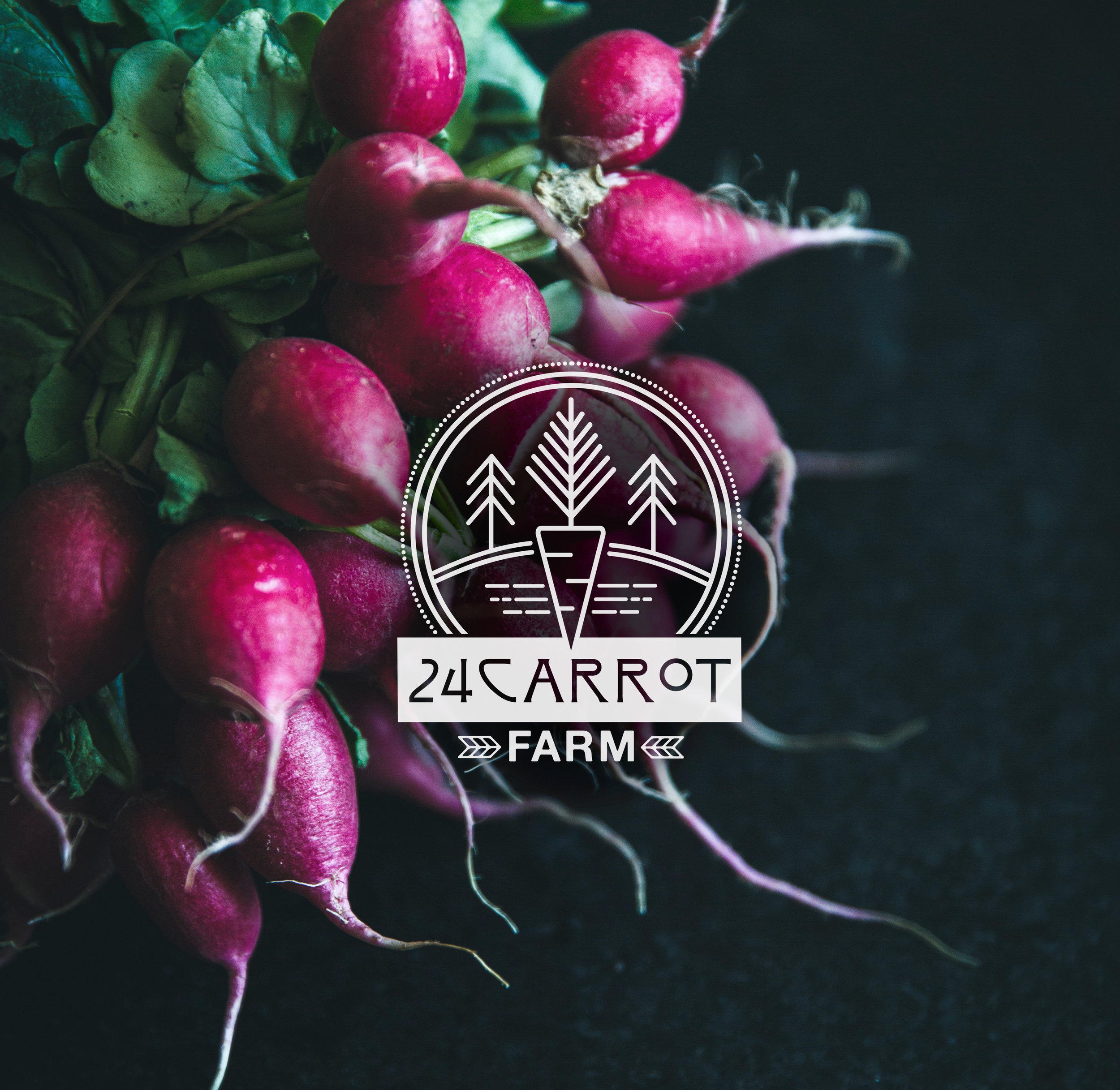 24carrotPortfolio.jpg