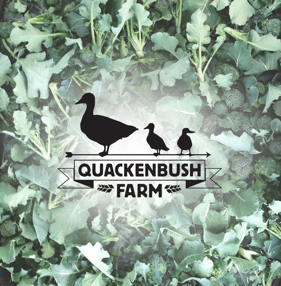 QuackenBushPortfolio.jpg