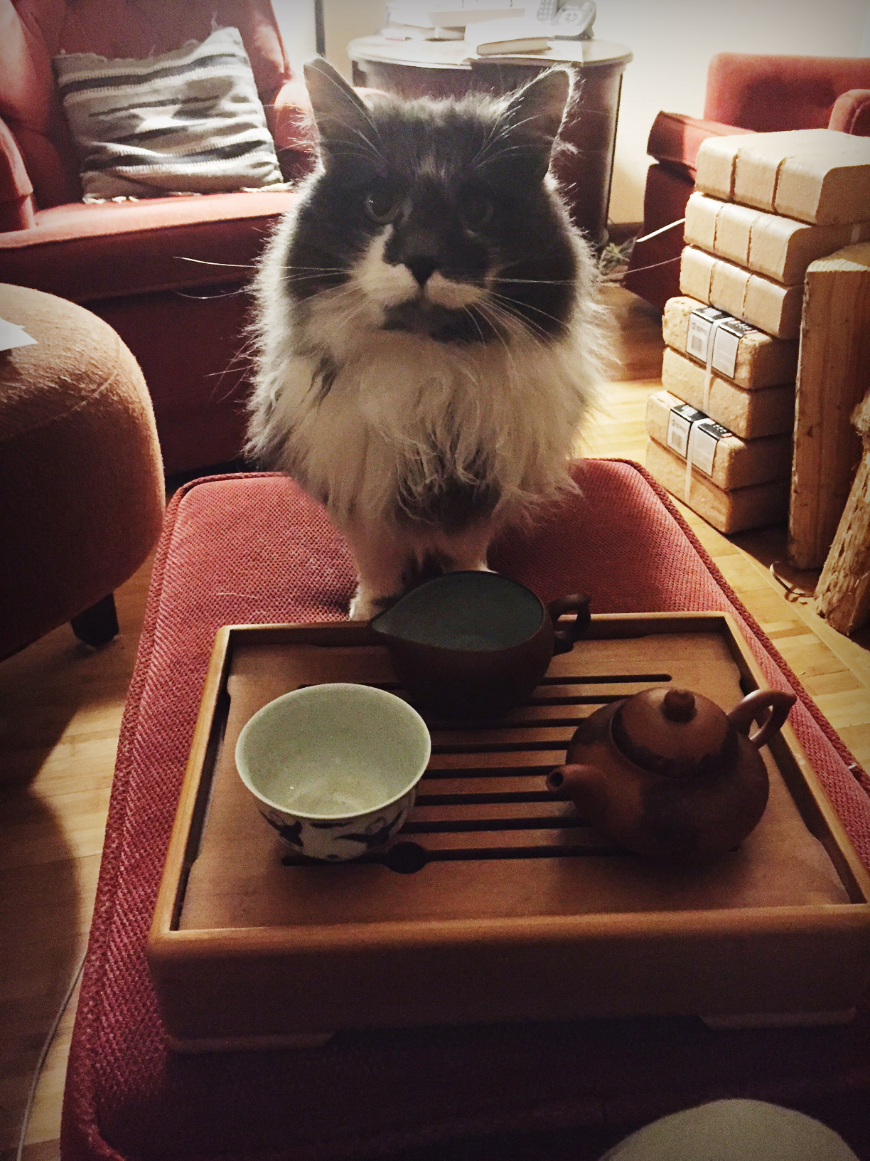 Cat sitting before a tea tray in a comfortable living room.