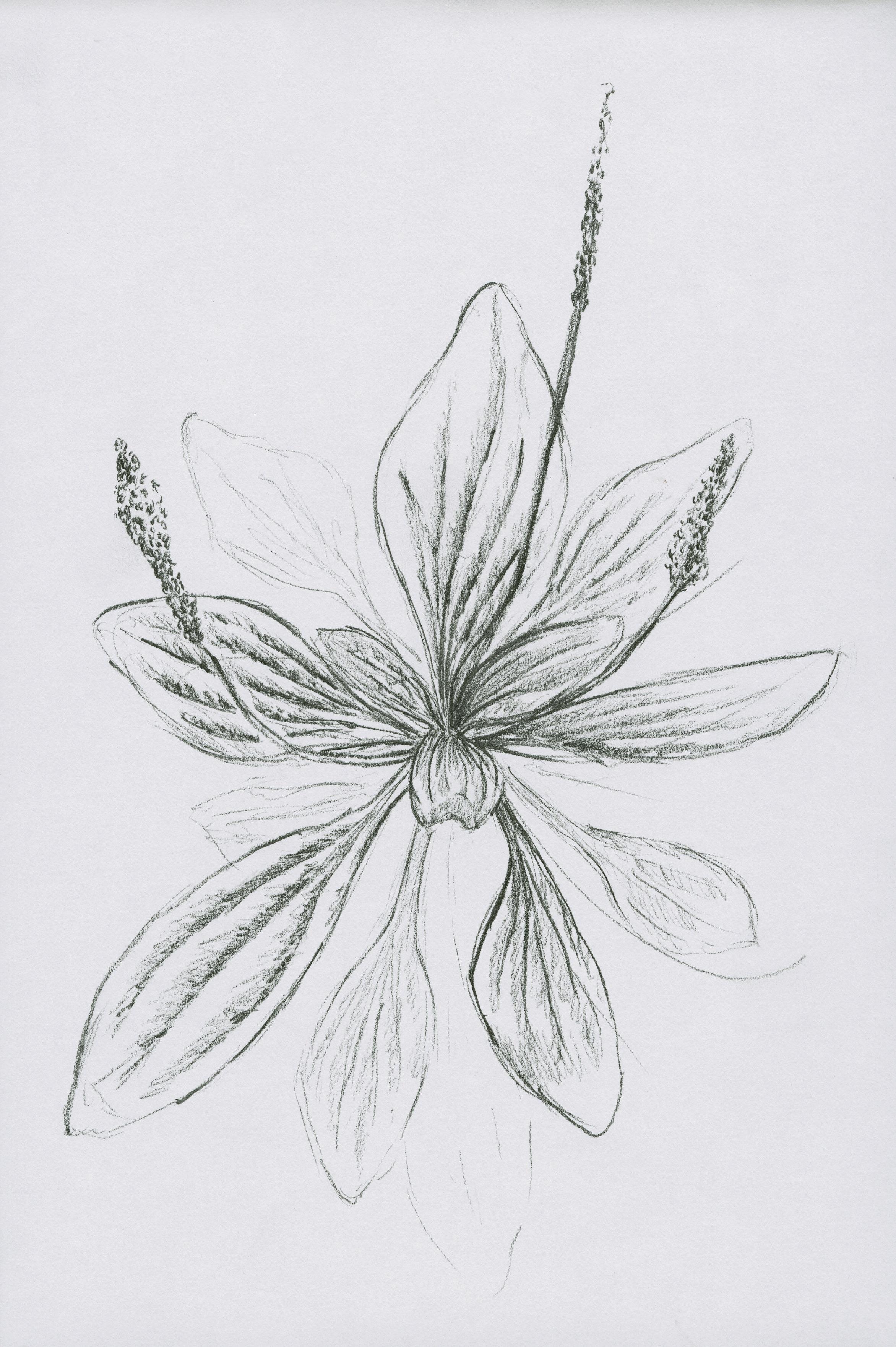 Cheqianzi, drawing by Maria Hicks