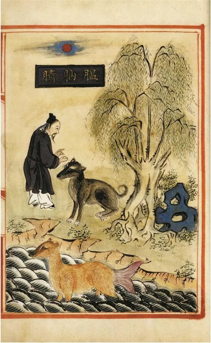 Illustration of wanaqi from a Ming dynasty materia medica