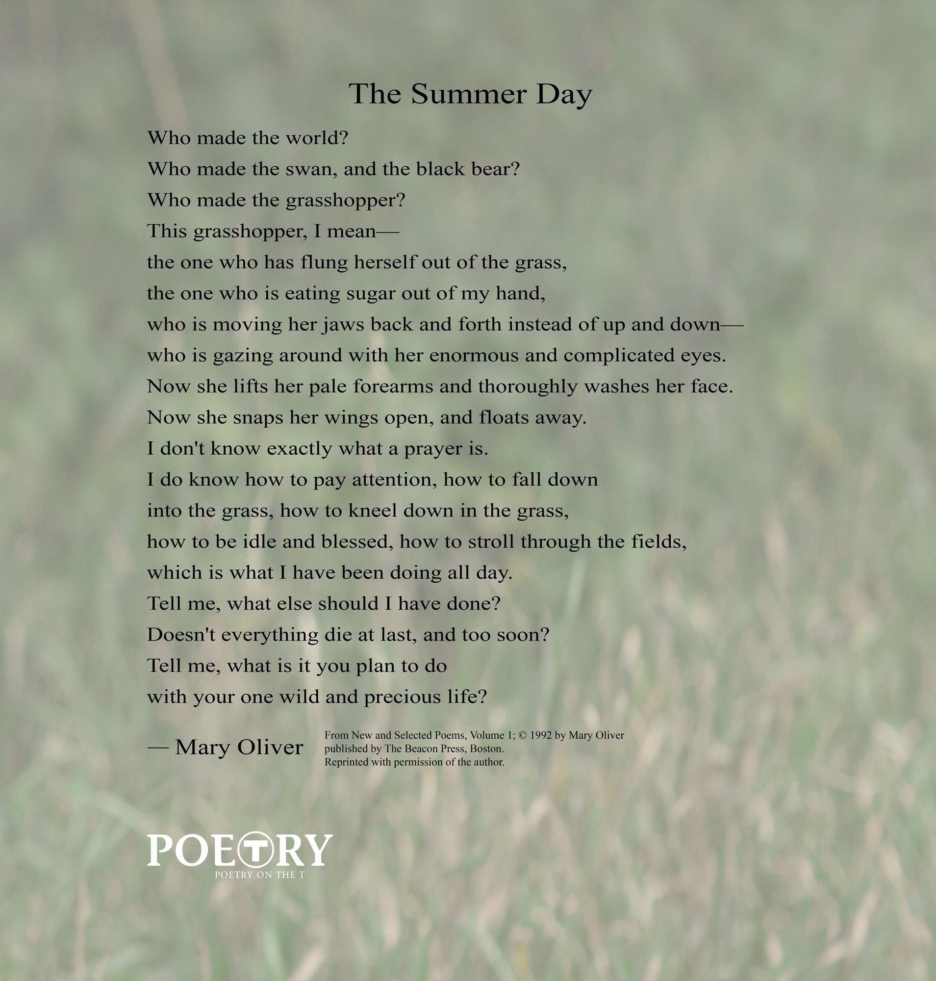 the-summer-day-plain.jpg