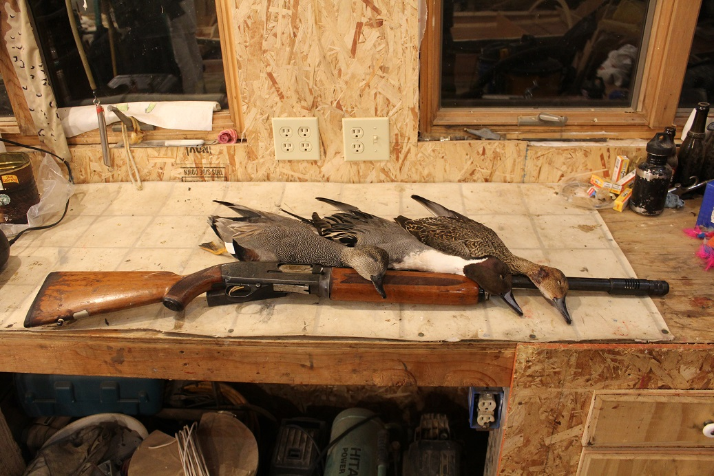 IMG_043 gadwall and pintail.JPG
