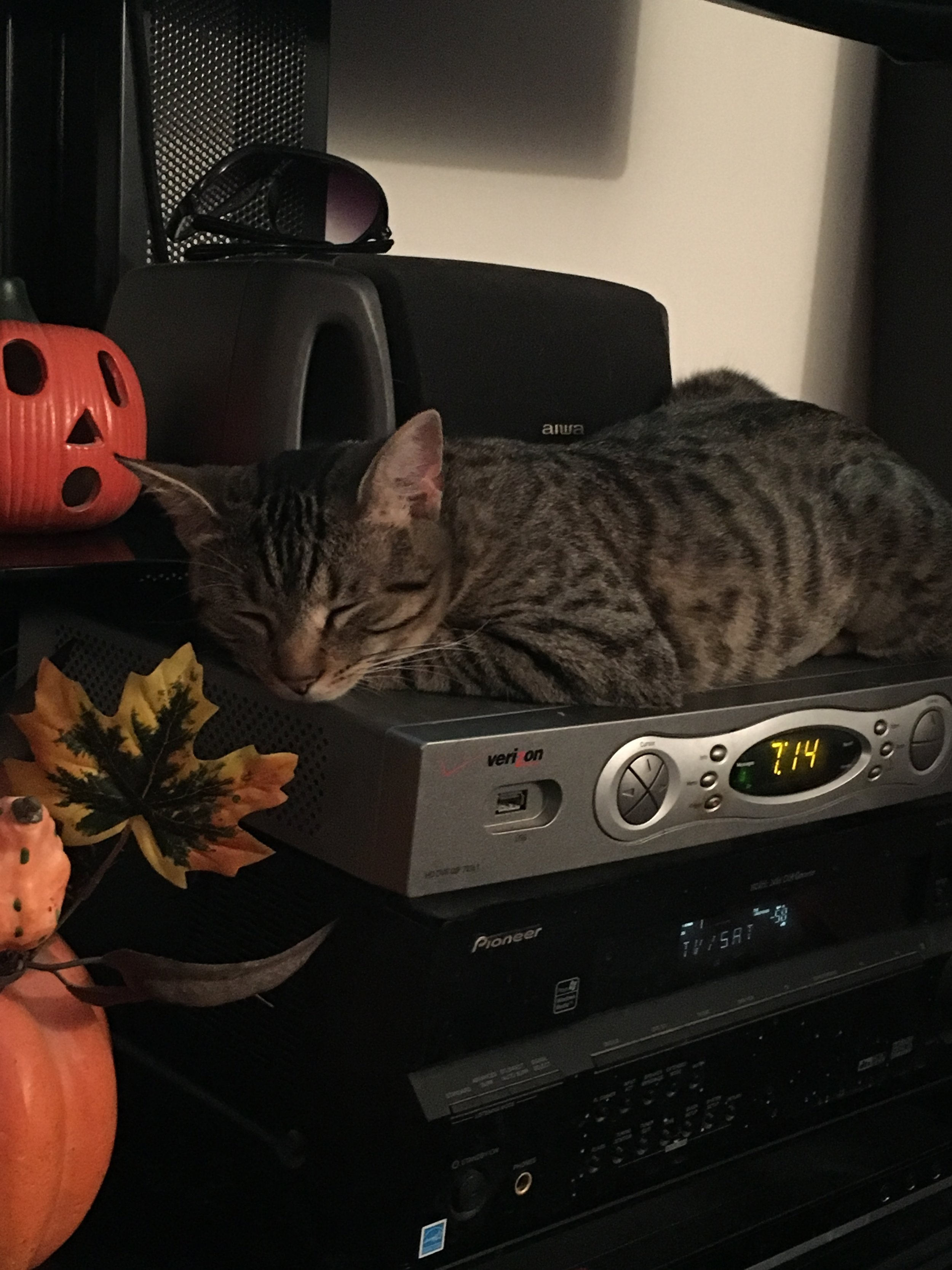 Her cat sister, meanwhile, made an adorable decoration.