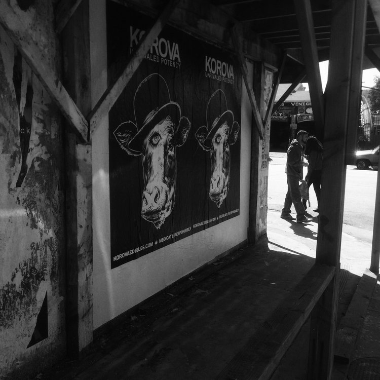 Albany+and+Venice.jpg