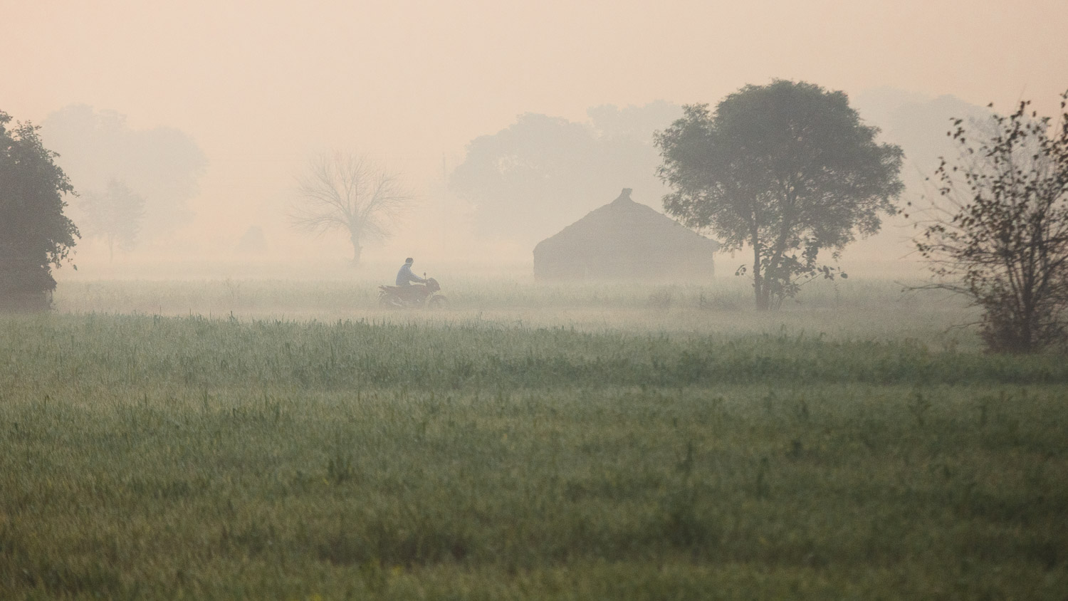 A motorbike drives through morning haze in the countryside of Uttar Pradesh, India