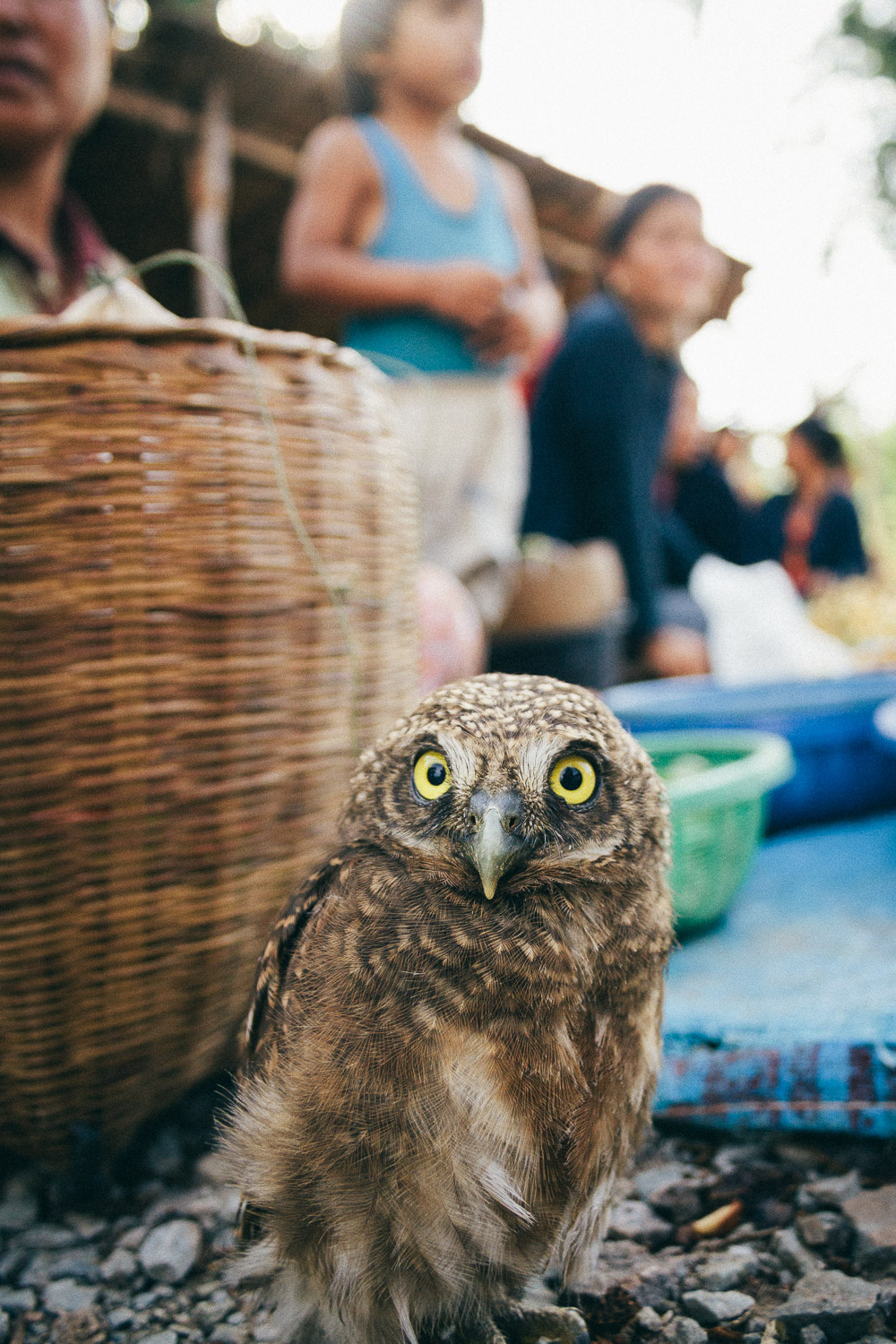 An owl for sale at a roadside market in Savannakhet Province, Laos