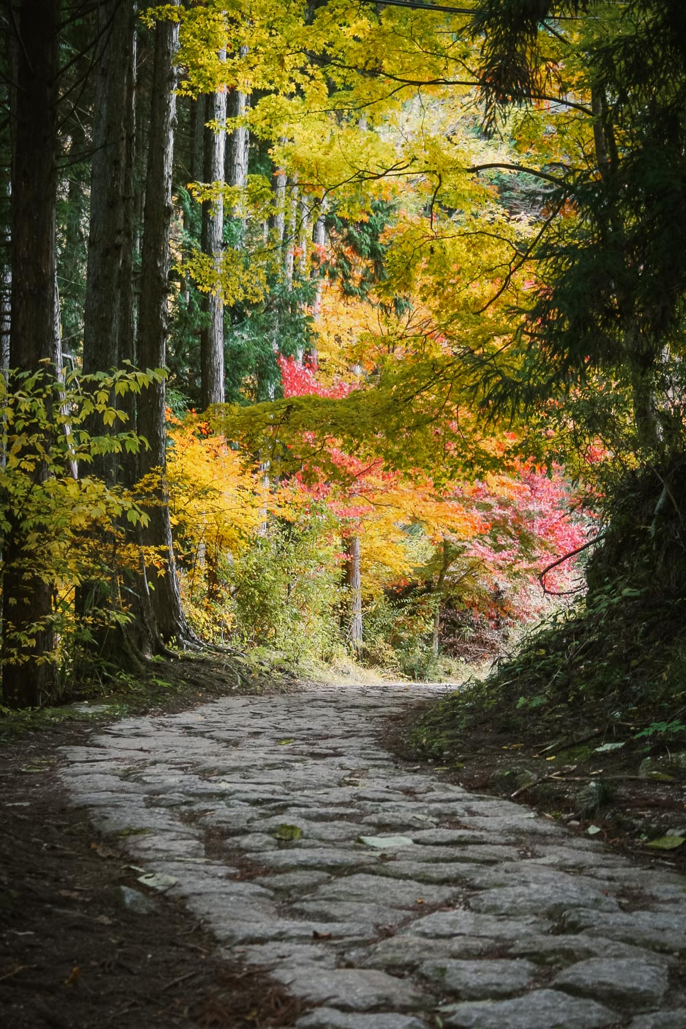 Autumn foliage and cobbled path on the Nakasendo between Magome and Tsumago, Japan
