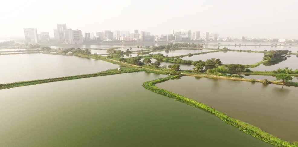 Urban development encroaching on the East Kolkata Wetlands. Credit: HSBC