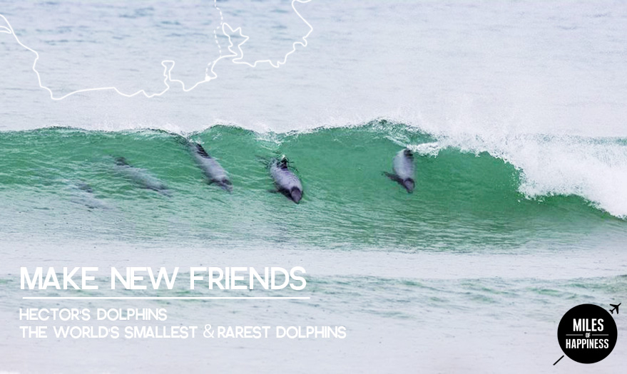 The Catlins - Hector Dolphins