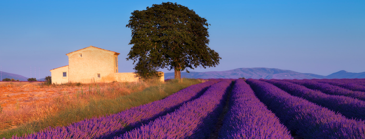 The Ultimate France Bucketlist : Provence