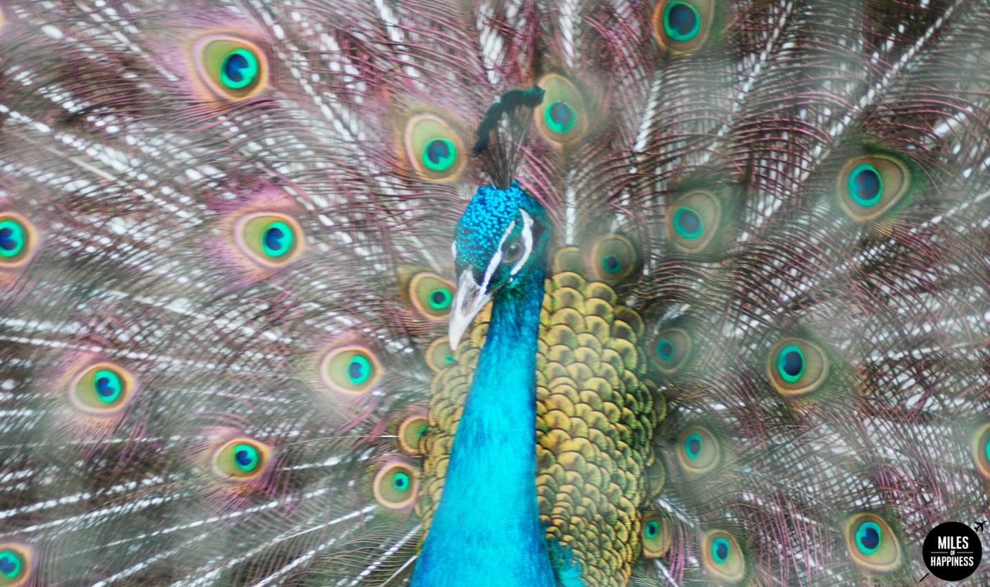 10 Reasons to love Mauritius : The Wildlife