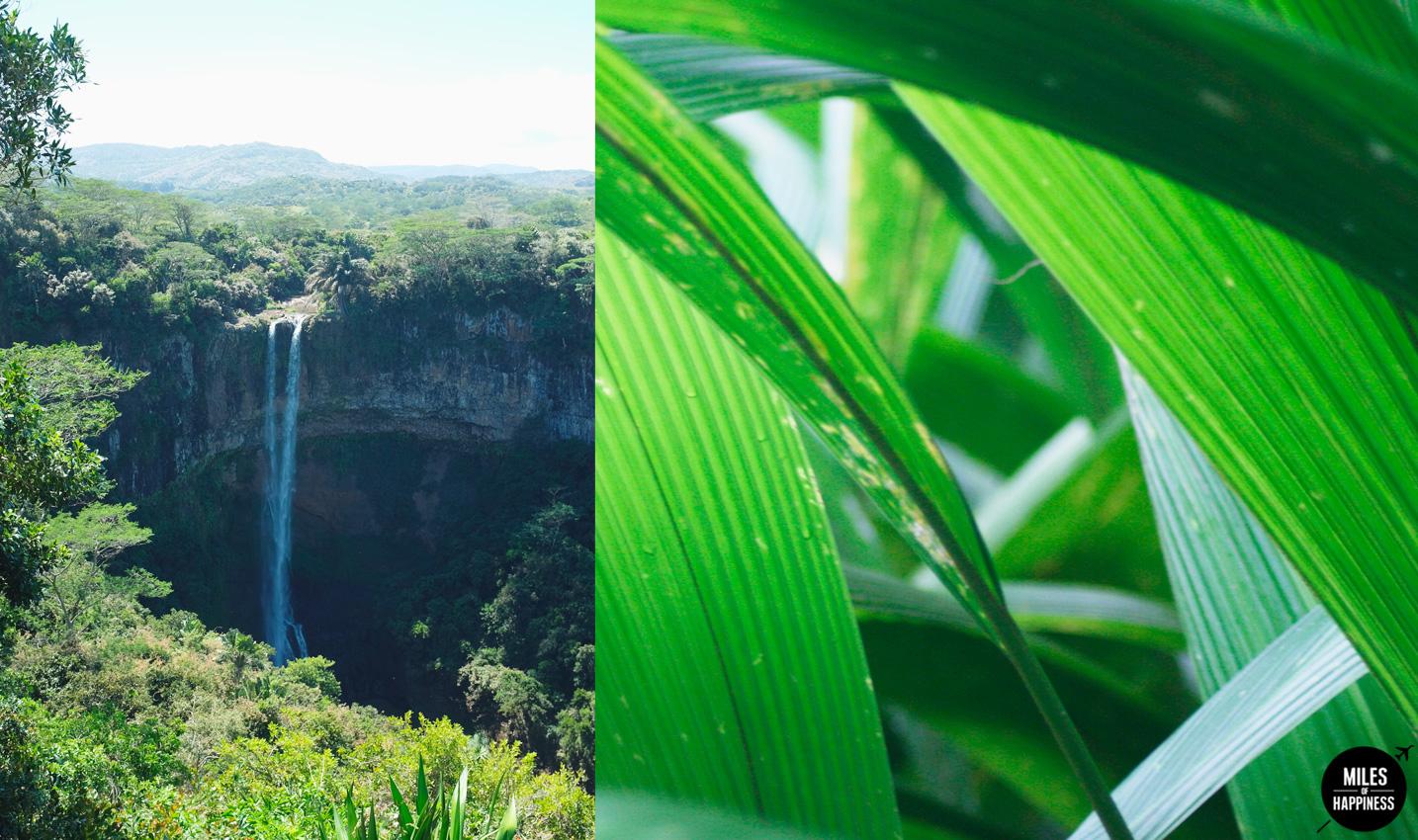 10 Reasons to love Mauritius : The Nature