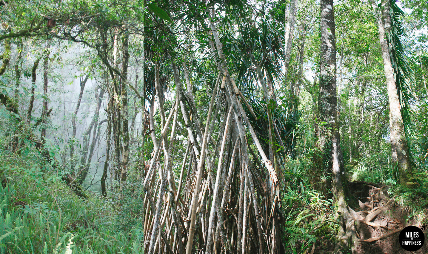 An epic volcano hike: trekking Mt Rinjani