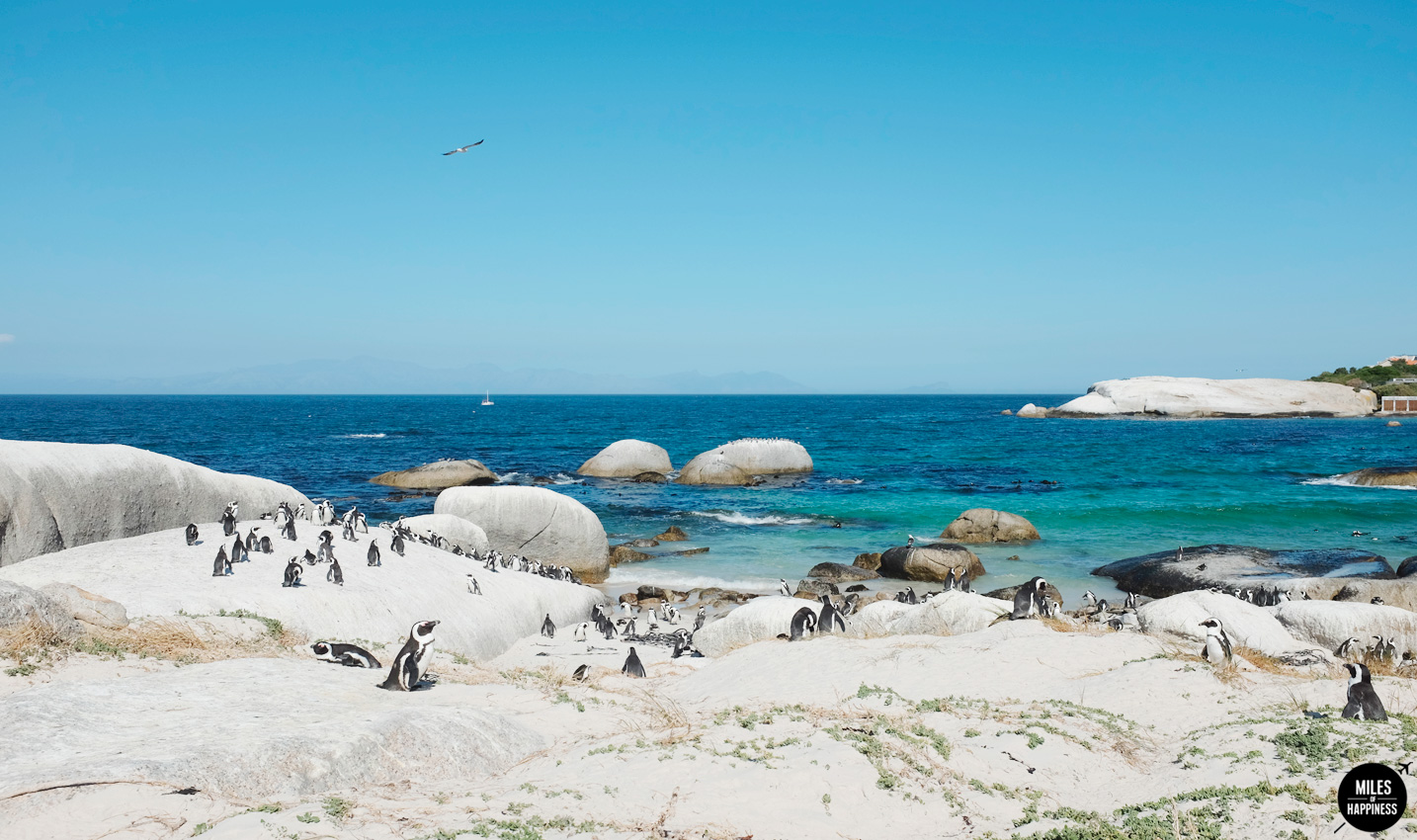 10 Things to do in Cape Peninsula