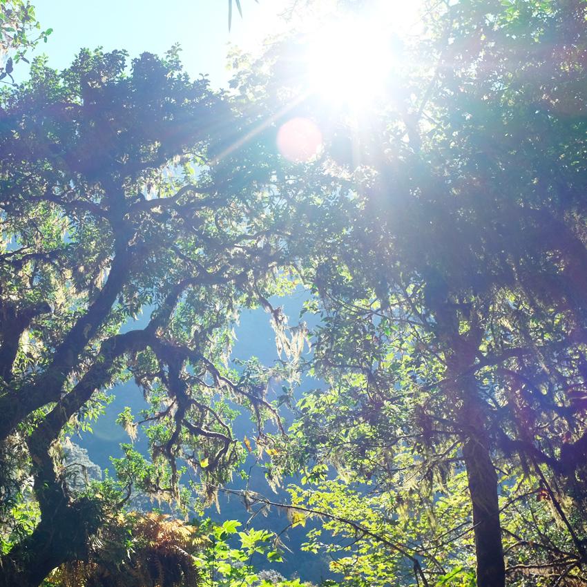 Trekking in the Himalayas: Langtang Valley